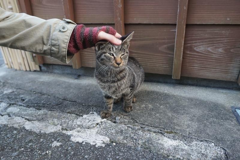 カギ尻尾の猫