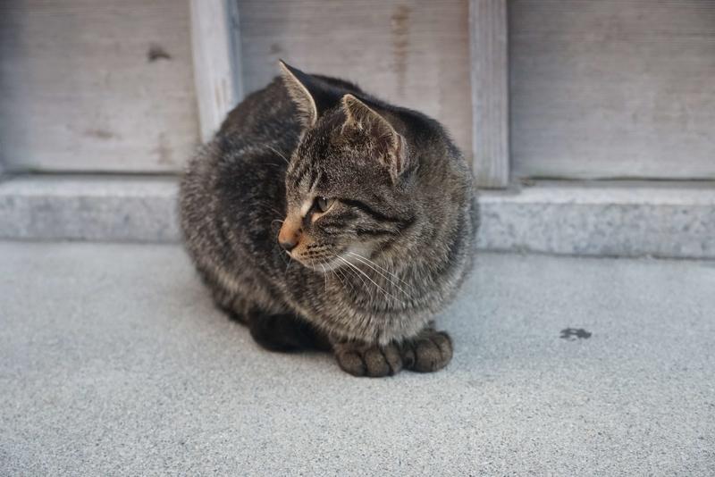 カギ尻尾の猫2