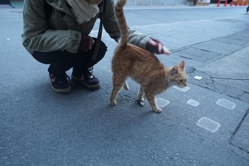 伊勢のノラ猫