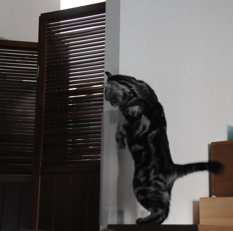 パーテーションの隙間からのぞく猫