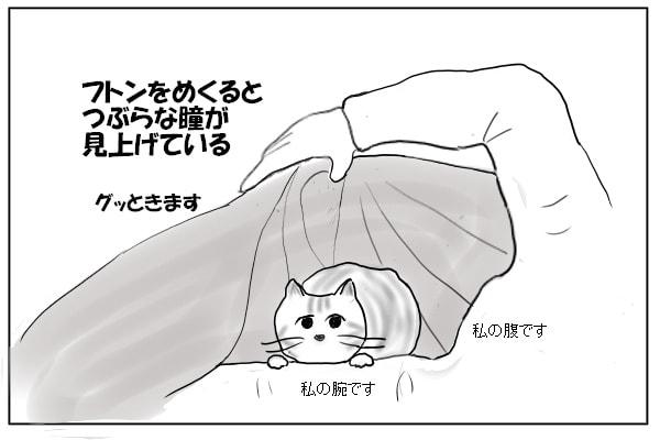ふとんの中のネコ