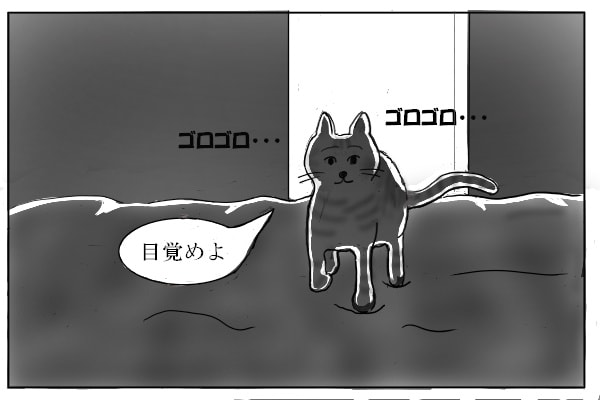 布団の上を歩く猫