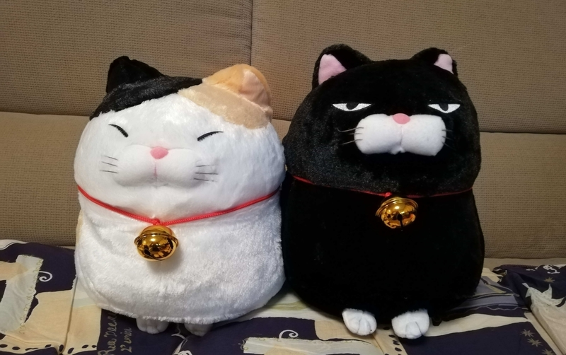 三毛猫と黒猫