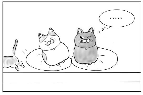 三毛猫と黒猫2