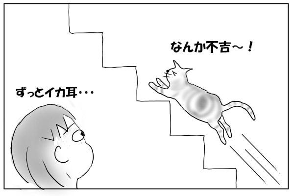 階段を駆け上がる猫