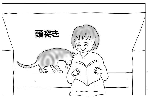 頭突きする猫