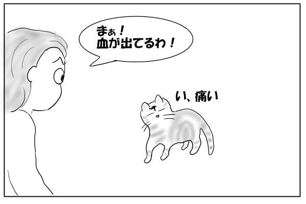 額から血を流す猫