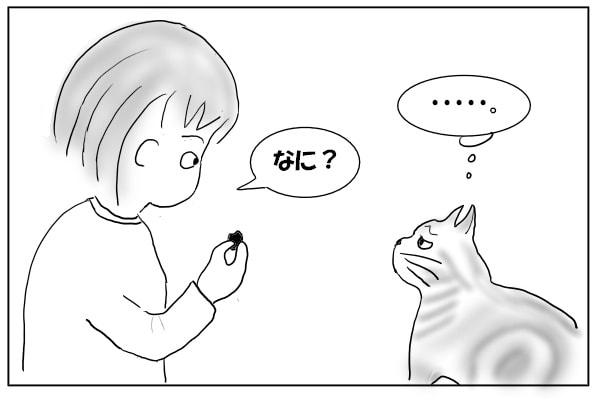 ジトっと見る猫