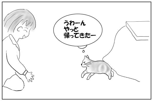 走り寄る猫
