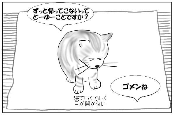 寝ぼける猫
