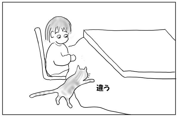膝に乗る猫