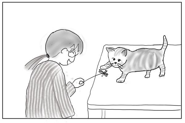 じゃらしで遊ぶ猫