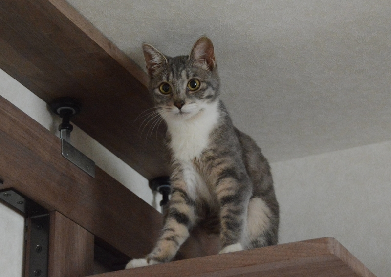 キャットウォークの登った猫