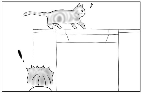 洗面台を歩く猫