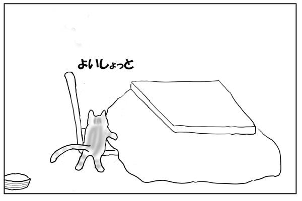 椅子に乗る猫