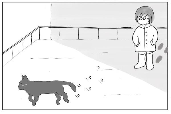 雪の上を歩く猫