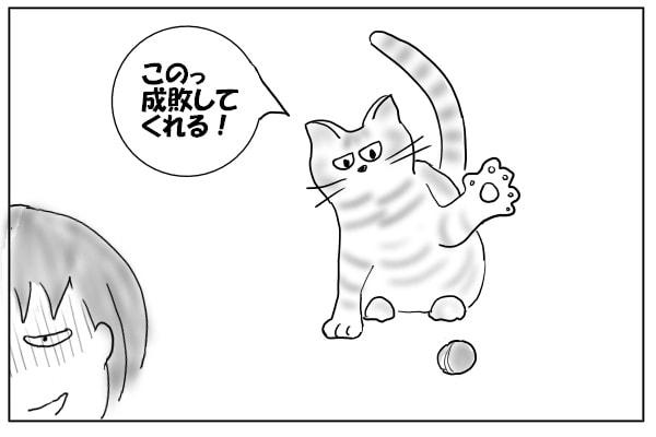 ビーズを追いかける猫