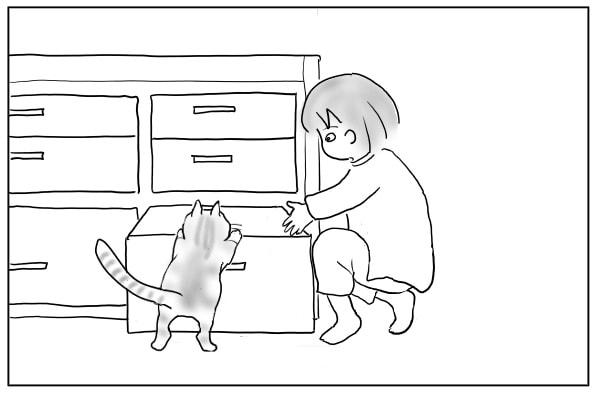 邪魔する猫