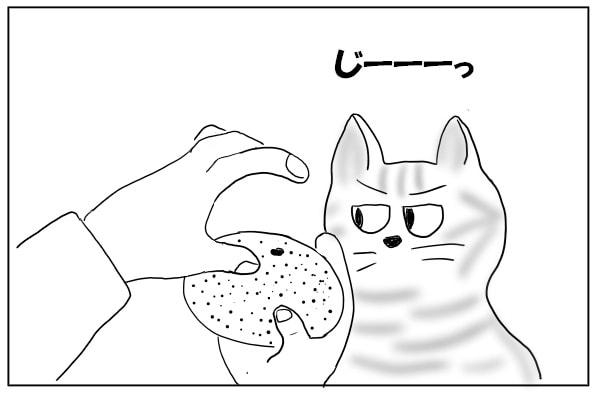 みかんと猫
