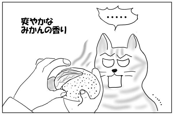 みかんの匂いに固まる猫