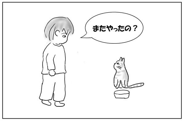 猫に近づく
