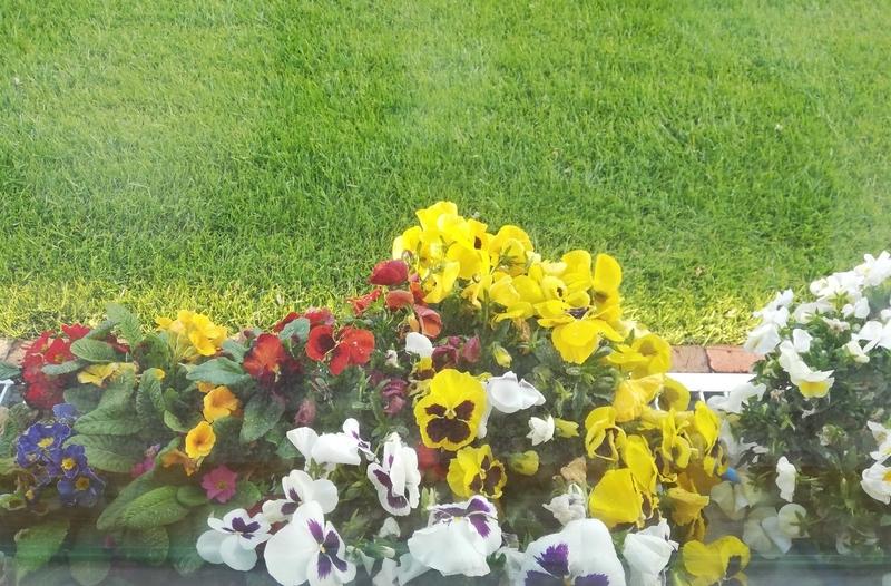 植木のお花