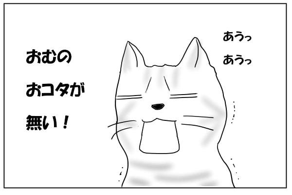 唖然とする猫