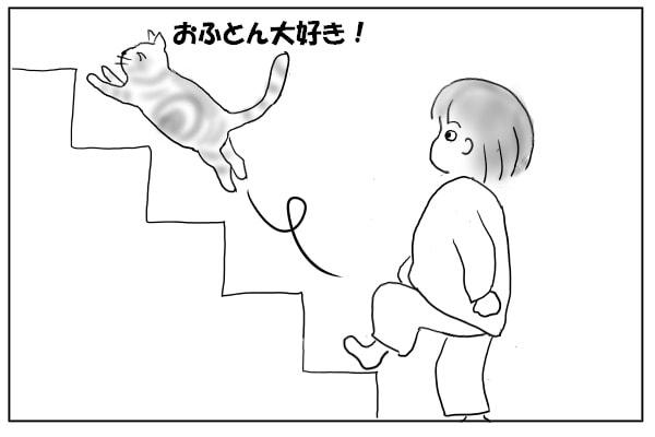 はしゃぐ猫