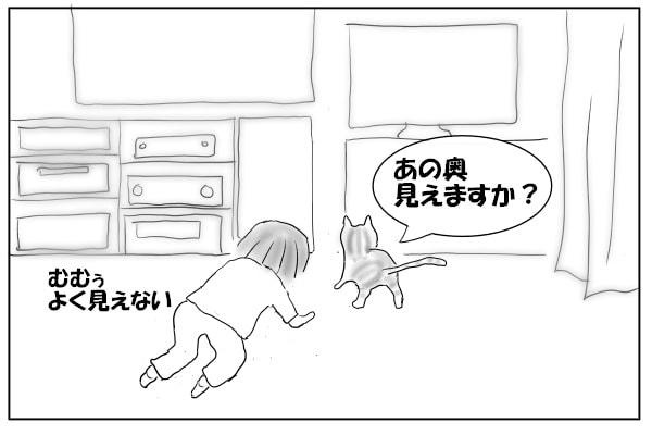 猫の後ろを歩く