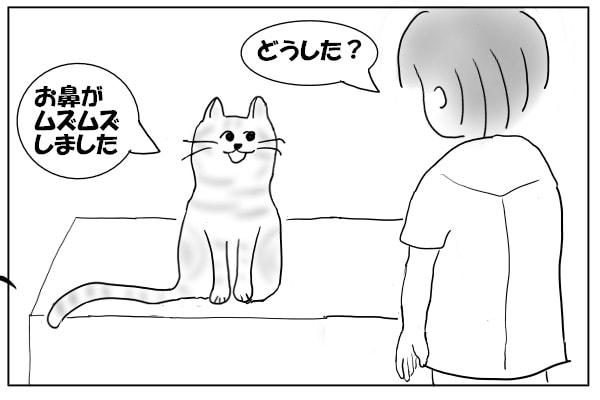 猫をみにいく