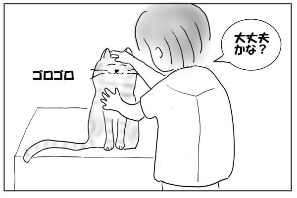 猫を触ってみる