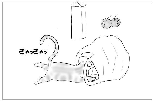 袋で遊ぶ猫