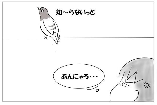 電線のハト