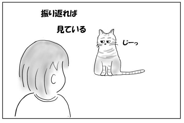 猫と目があう