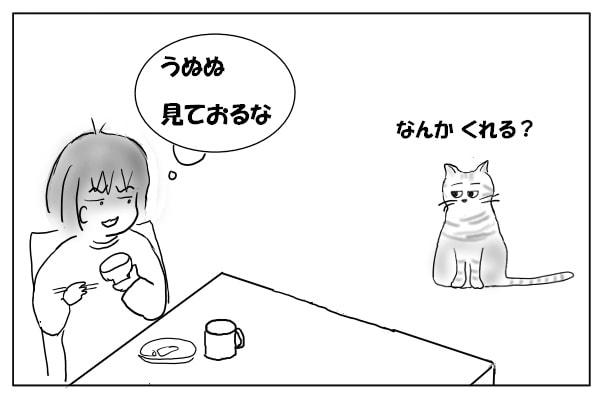 食事を見ている猫