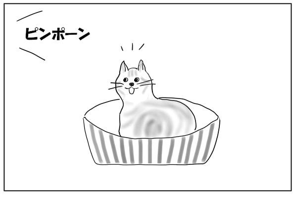 チャイムに反応する猫