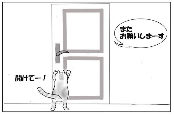 玄関に出たがる猫
