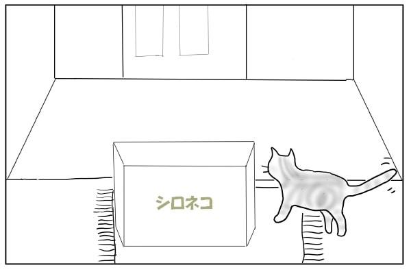 玄関に出た猫