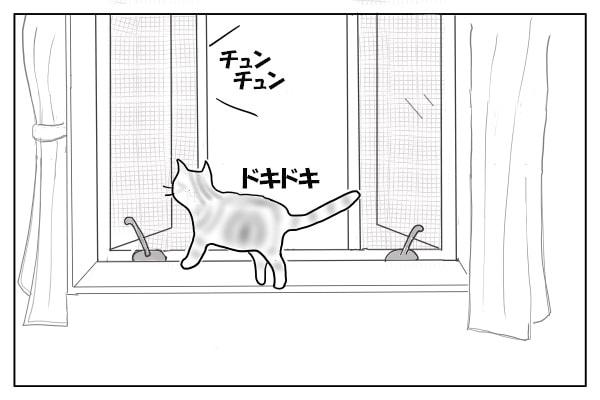 出窓に飛び乗った猫