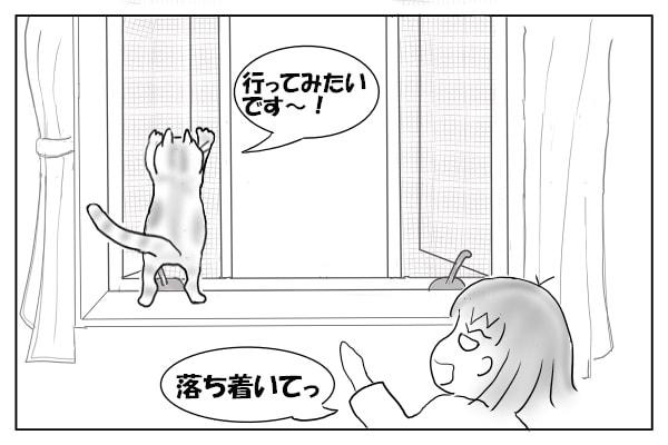 網戸を登ろうとする猫