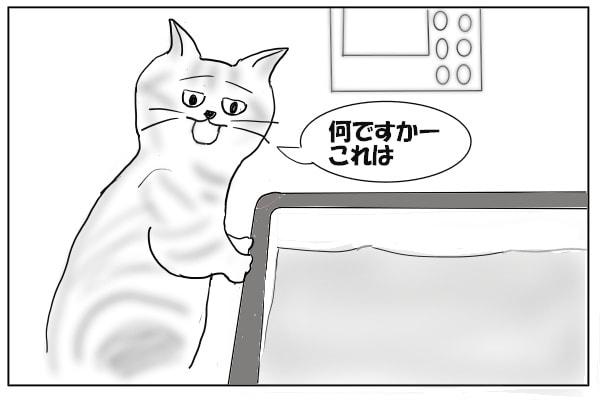 風呂で鳴く猫