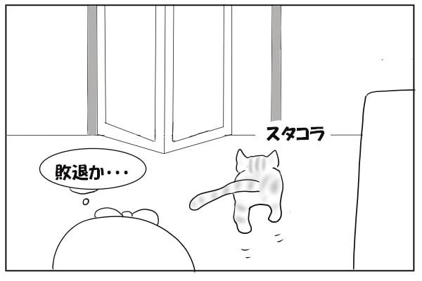 風呂から出ていく猫