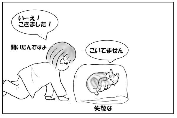 否定する猫