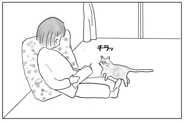 顔を伺う猫