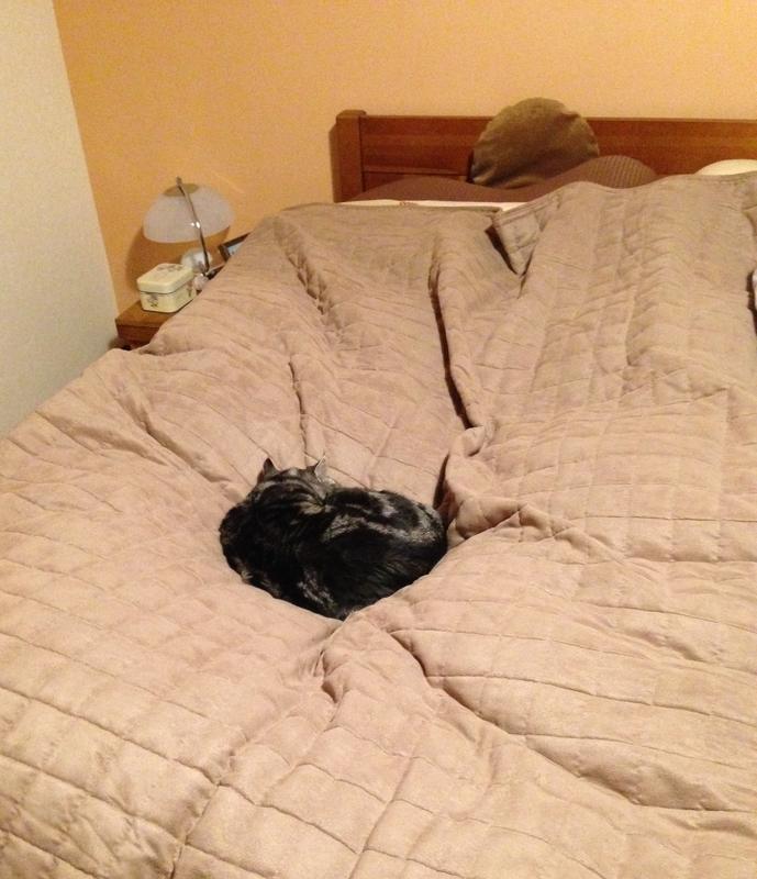 ベッドの真ん中で寝る猫