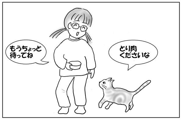 シッターさんと猫
