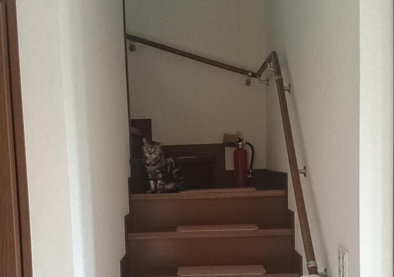 階段の上の猫