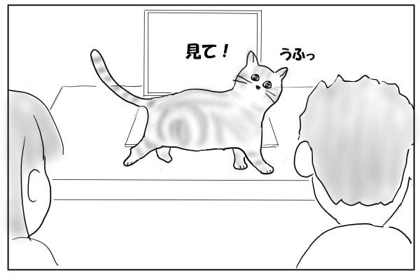 テーブルを歩く猫