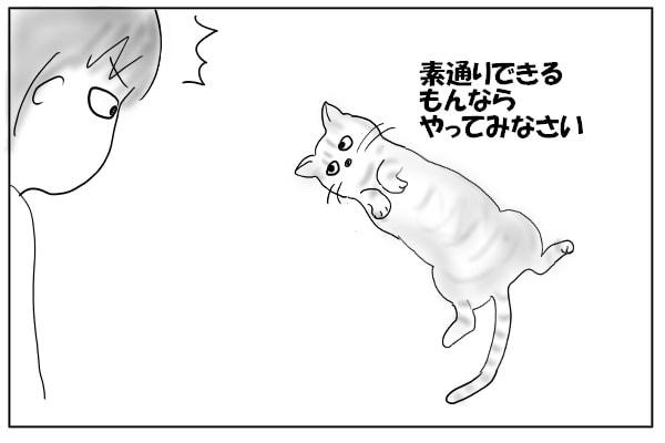 ゴロンとして見つめる猫