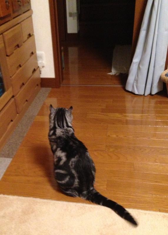 玄関に目をやる